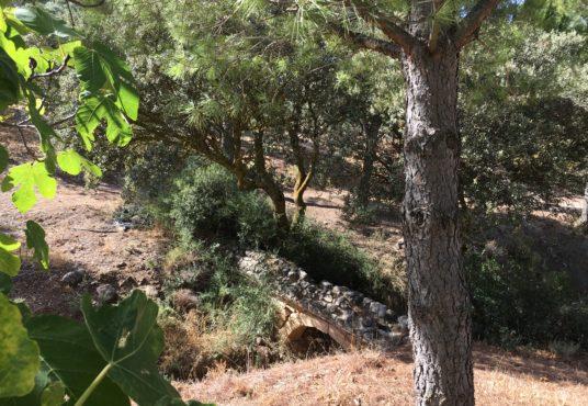 Finca en Antequera